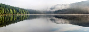 Header-Lake-with-Trees-and-Fog